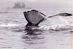 whale-watching-resize.jpg