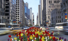 chicago_street_flowers-edited.jpg
