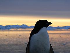 antarctica-jjunyent.jpg