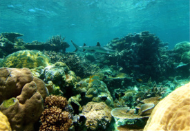 great_barrier_reef_with_kids_3