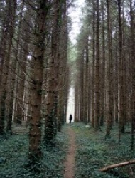 Ireland Forest Small