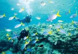 PADI scuba diving