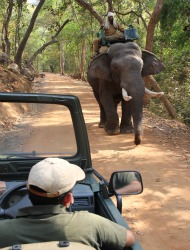 Indian safari Wildland Adventures