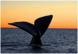 whale watching argentina