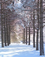 Avenue of the Pines in Saratoga Spa State Park