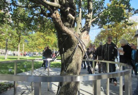 survivor-tree-9-11-memorial