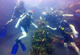 Bali Christmas Tree 2