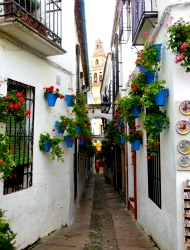 Calle de las Flores (Street of Flowers) in Cordoba
