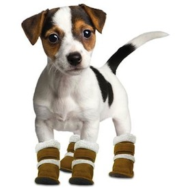 Pugz shoes dogs boots