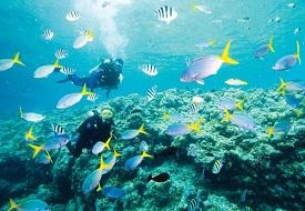 Diver_Fish_Contact_resized(c) PADI