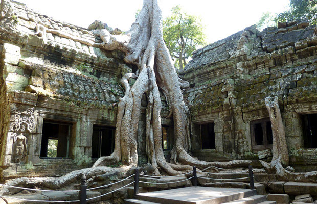 Ta-prohm-temple-2