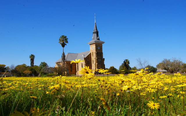 Namaqualand flowers in Nieuwoudtville