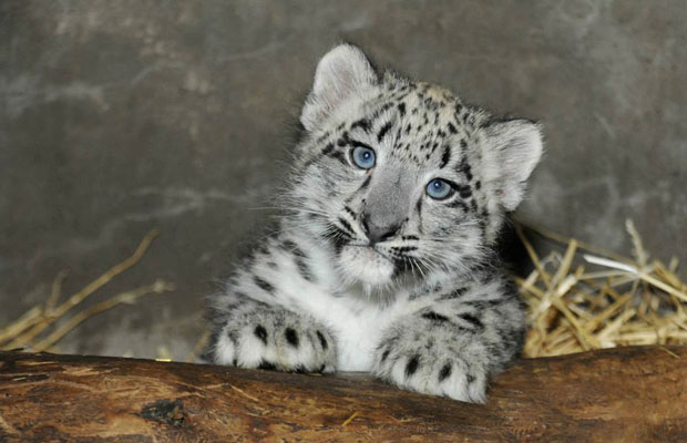 Baby Zoo Animals to See Right Now