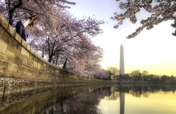Cherry Blossom Festival - Washington DC - Buddy Secor (1)