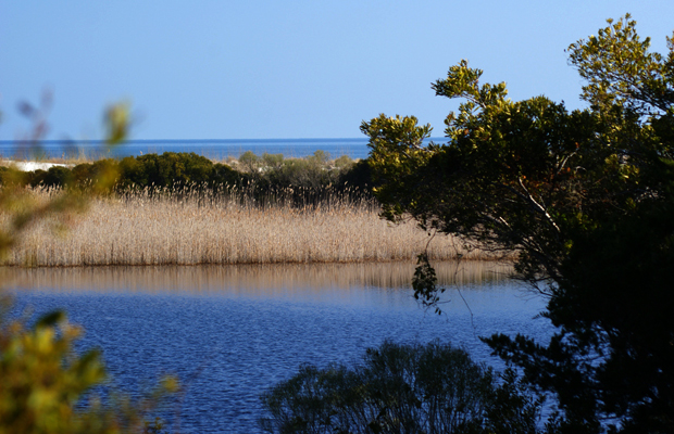 murrells inlet - huntington beach state park - matt trudeau - 620