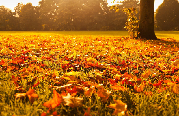 autumn - pixabay - 620