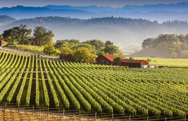 Napa-valley-james-daisa-620