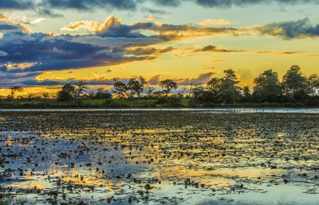 pantanal - istock - 620