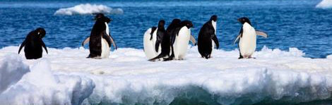 antarctica, a top ecotourism destination