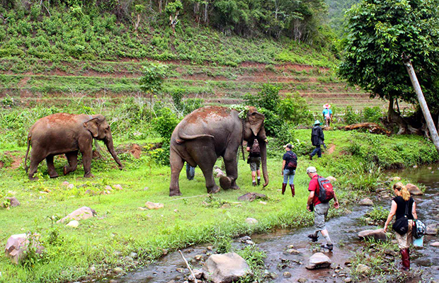 The Elephant Nature Park, Thailand