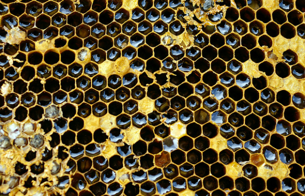 Honeycomb-flickr_tamaki-sono