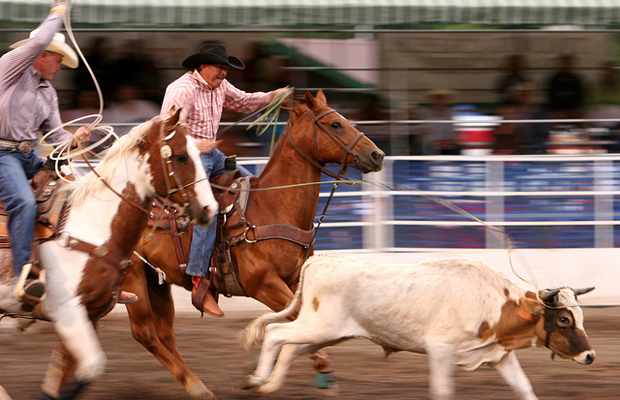 steamboat springs pro rodeo series - Visit Colorado