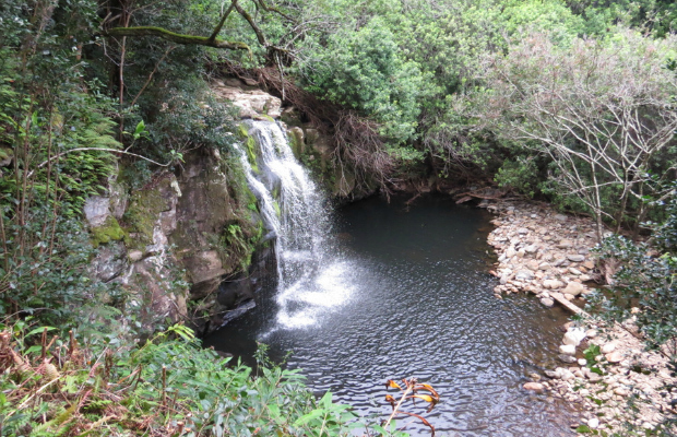 Kohala Waterfalls1, Hawaii Island, Photo Courtesy Dana Rebmann