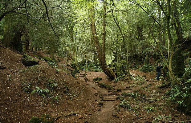 Flickr Neil Barnwell - Puzzlewood