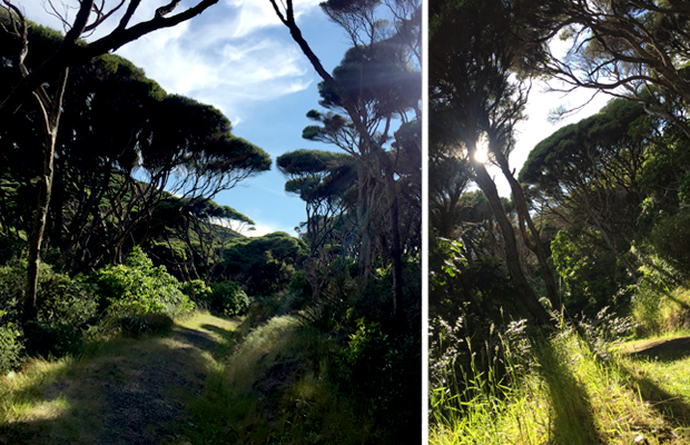 hiking on Kapiti Island, Wellington, New Zealand