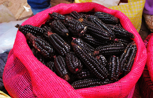 Peru - Purple Corn - 620x400
