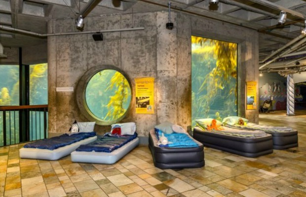 Seashore Sleepover at Kelp Forest Exhibit at Monterey Bay Aquarium in California