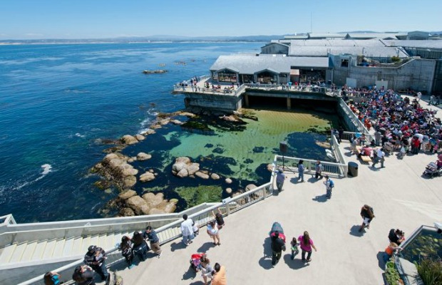 Great Tide Pool at Monterey Bay Aquarium in California