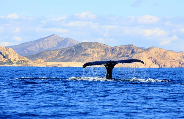 Whale in Cabo San Lucas, Mexico/iStock