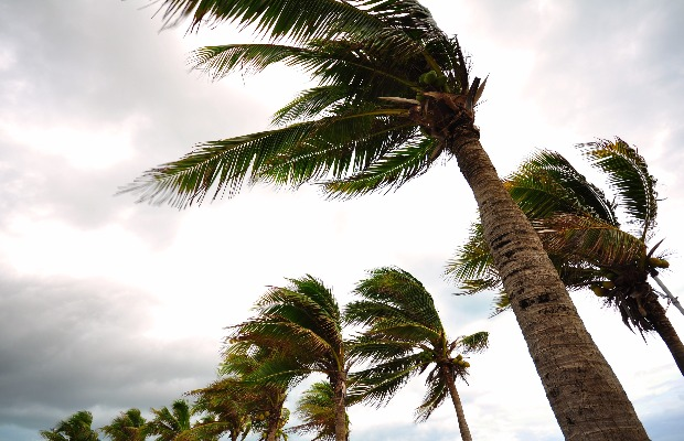 hurricane, Caribbean, palm trees