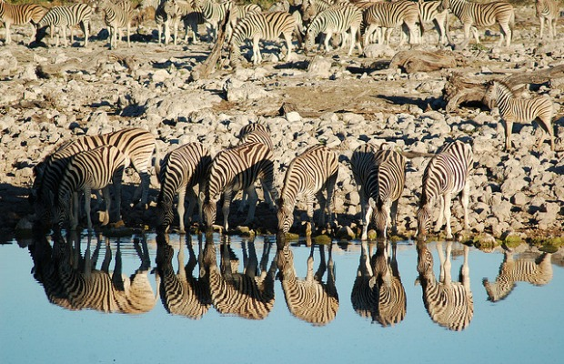 safari in south africa, an affordable travel destination idea