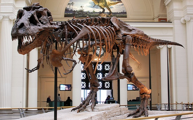 Field-museum-flickr-jessica