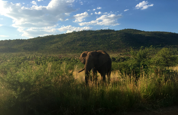 620_game-drive-in-pilanesberg-national-park-south-africa-near-johannesburg-lane-nieset