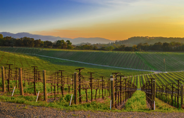 Sonoma, California, vineyards